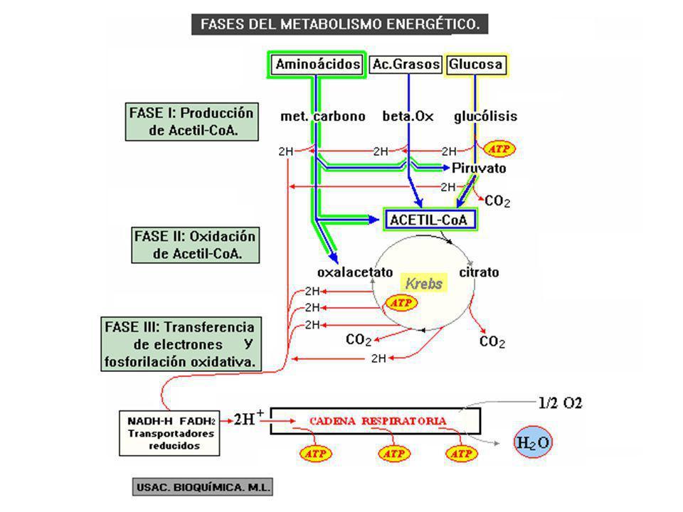 I- Cuestionario reflexivo (Introducción al Metabolismo) Slide_2