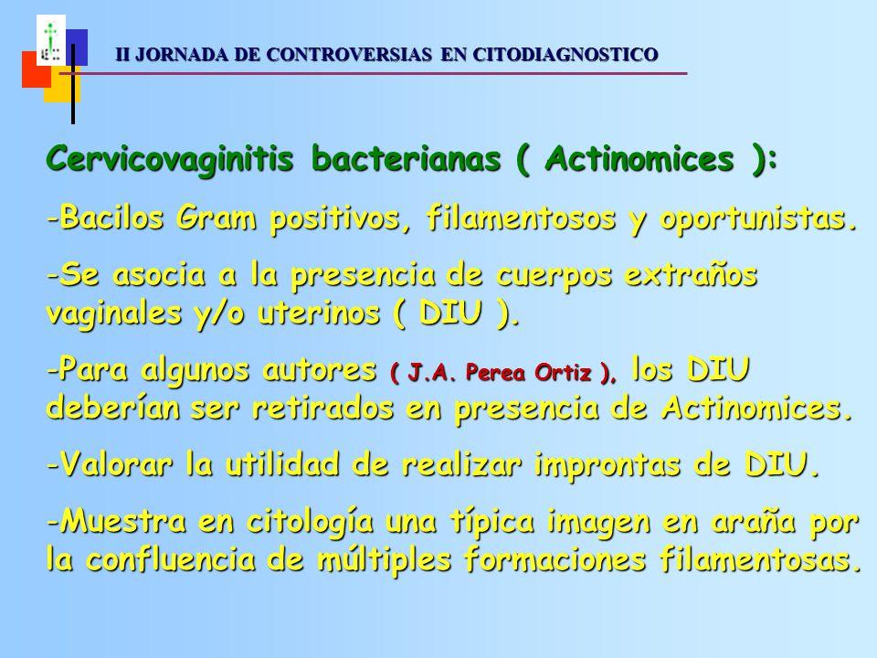 II JORNADA DE CONTROVERSIAS EN CITODIAGNOSTICO II JORNADA DE CONTROVERSIAS EN CITODIAGNOSTICO Cervicovaginitis bacterianas ( Actinomices ): -Bacilos Gram positivos, filamentosos y oportunistas.