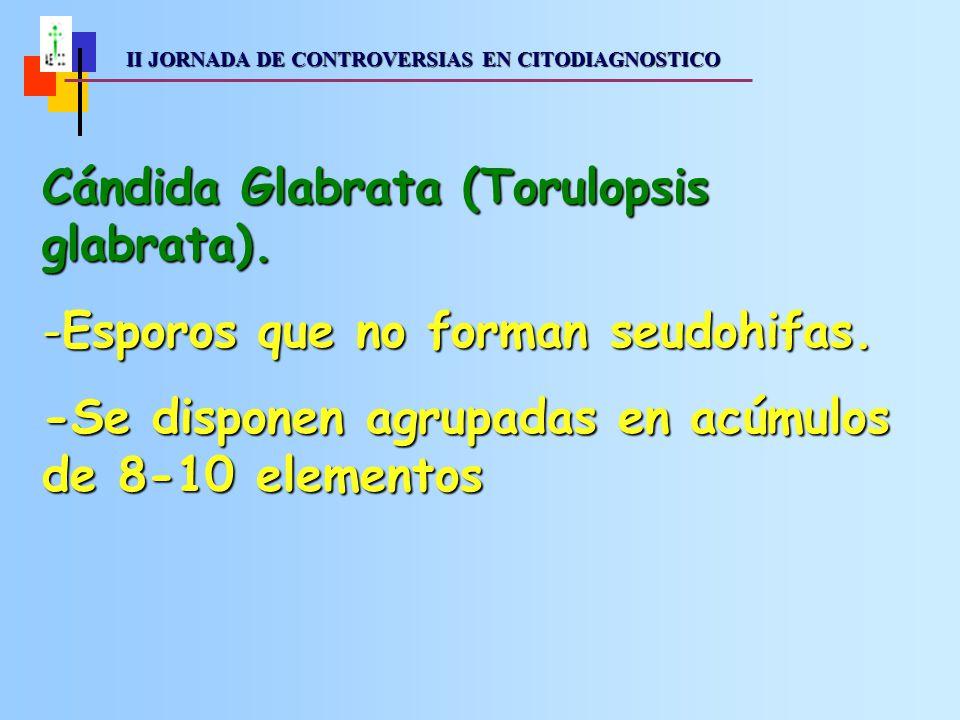II JORNADA DE CONTROVERSIAS EN CITODIAGNOSTICO II JORNADA DE CONTROVERSIAS EN CITODIAGNOSTICO Cándida Glabrata (Torulopsis glabrata).