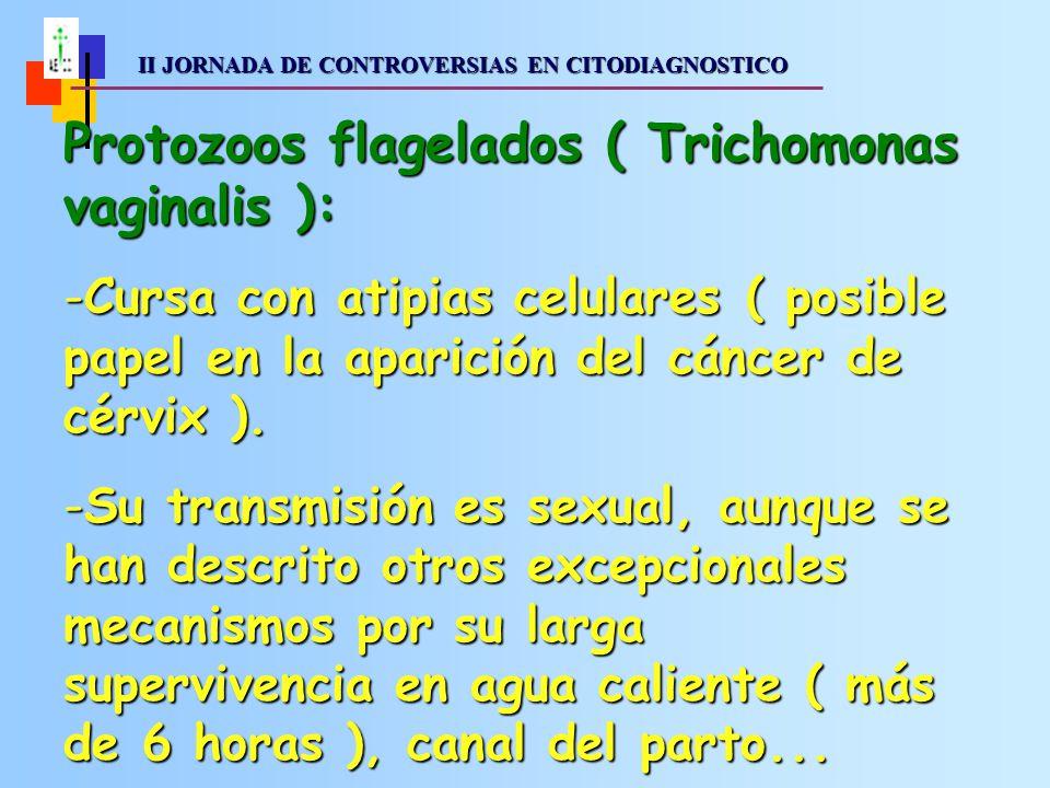 II JORNADA DE CONTROVERSIAS EN CITODIAGNOSTICO II JORNADA DE CONTROVERSIAS EN CITODIAGNOSTICO Protozoos flagelados ( Trichomonas vaginalis ): -Cursa con atipias celulares ( posible papel en la aparición del cáncer de cérvix ).