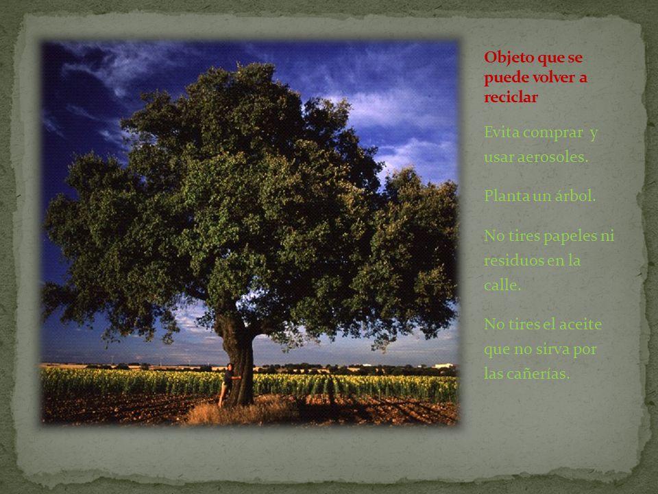 Evita comprar y usar aerosoles. Planta un árbol. No tires papeles ni residuos en la calle.