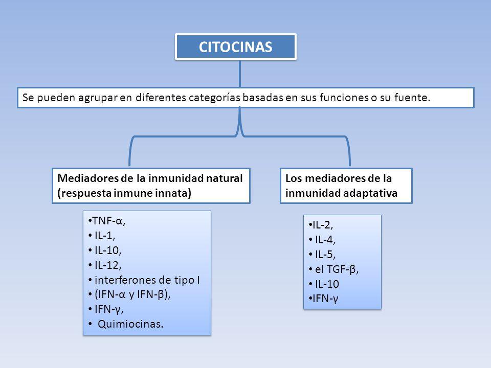 CD8 + células T reguladoras Algunas células CD8 + también puede ser inducida por el antígeno y la IL-10 para convertirse en una célula Treg.
