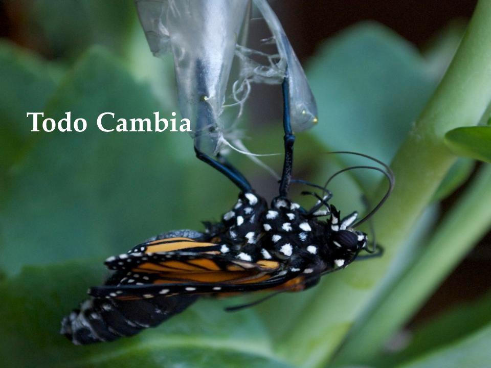 www.vitanoblepowerpoints.net Sólo es un cambio de enfoque y te cambiara la vida...