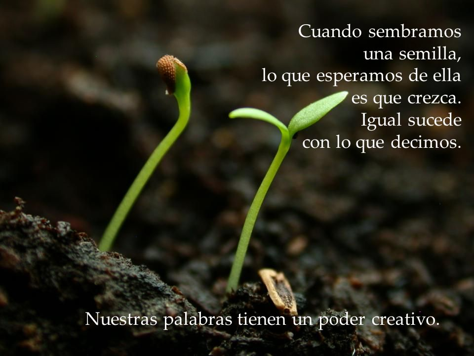 www.vitanoblepowerpoints.net Nuestras Palabras Crean Realidad