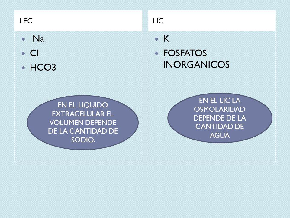 LECLIC Na Cl HCO3 K FOSFATOS INORGANICOS EN EL LIQUIDO EXTRACELULAR EL VOLUMEN DEPENDE DE LA CANTIDAD DE SODIO. EN EL LIC LA OSMOLARIDAD DEPENDE DE LA