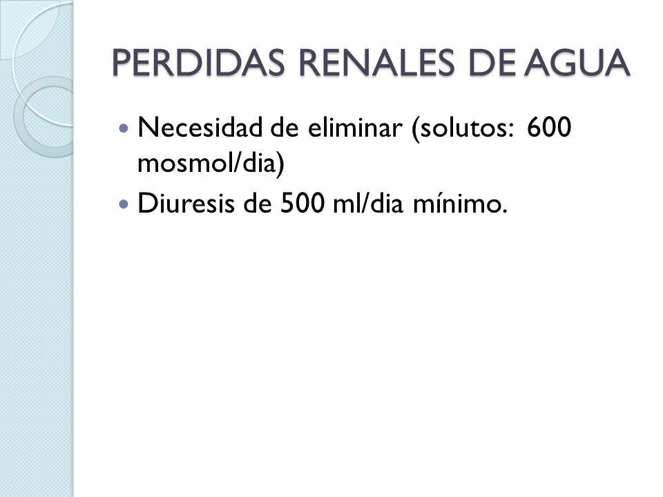 PERDIDAS RENALES DE AGUA Necesidad de eliminar (solutos: 600 mosmol/dia) Diuresis de 500 ml/dia mínimo.