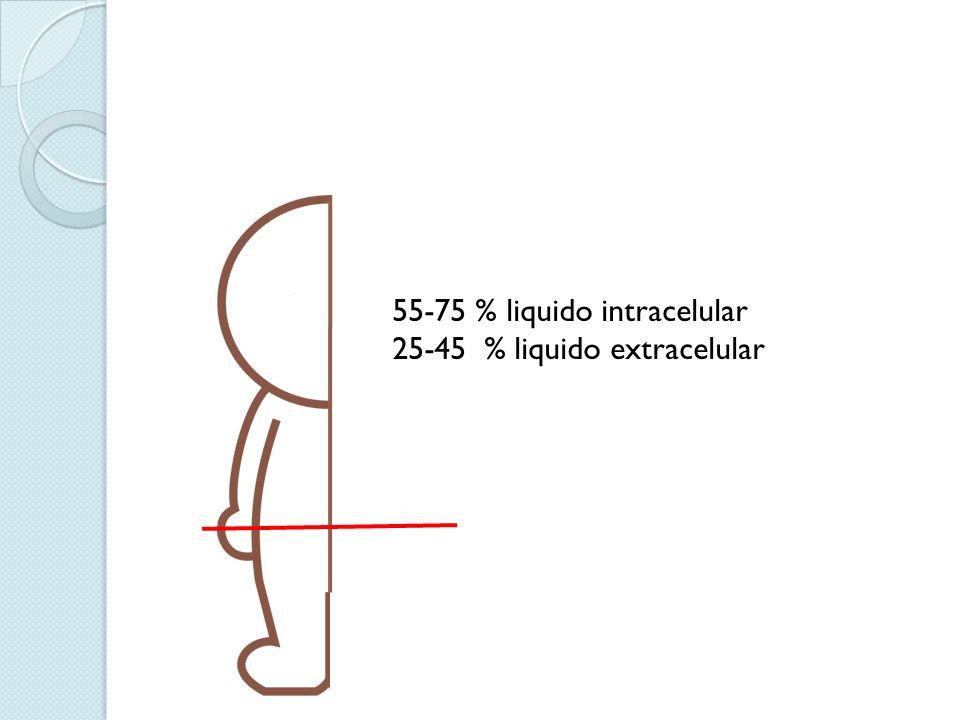55-75 % liquido intracelular 25-45 % liquido extracelular