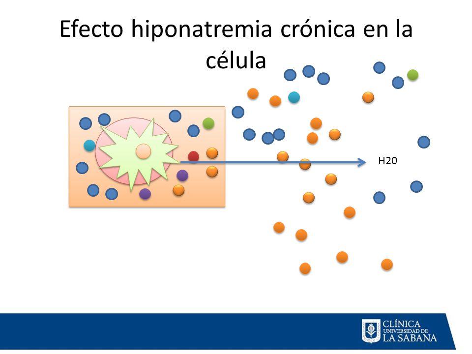 Efecto hiponatremia crónica en la célula H20