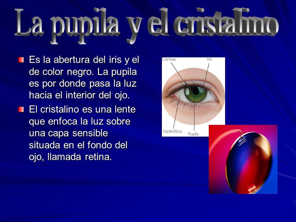 Es la abertura del iris y el de color negro. La pupila es por donde pasa la luz hacia el interior del ojo. El cristalino es una lente que enfoca la lu