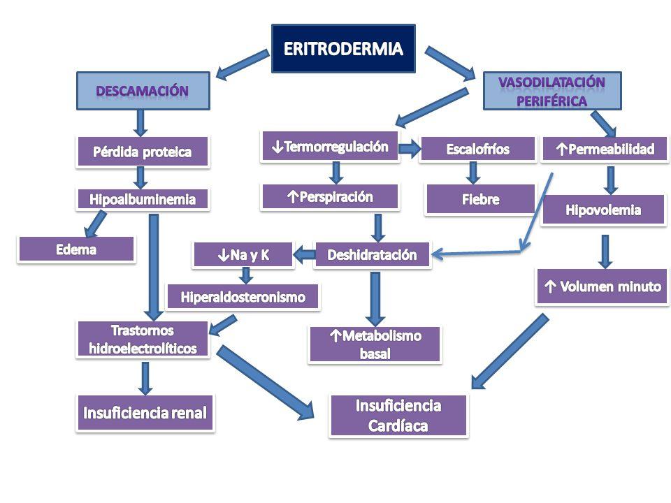 1.Secundarias a dermatosis (40%) 2.Idiopáticas (20-40%) 3.Farmacodermia (15 -20%) 4.Neoplásicas (5%) 5.Infecciosas 6.Infantiles ERITRODERMIA - ETIOLOGÍA