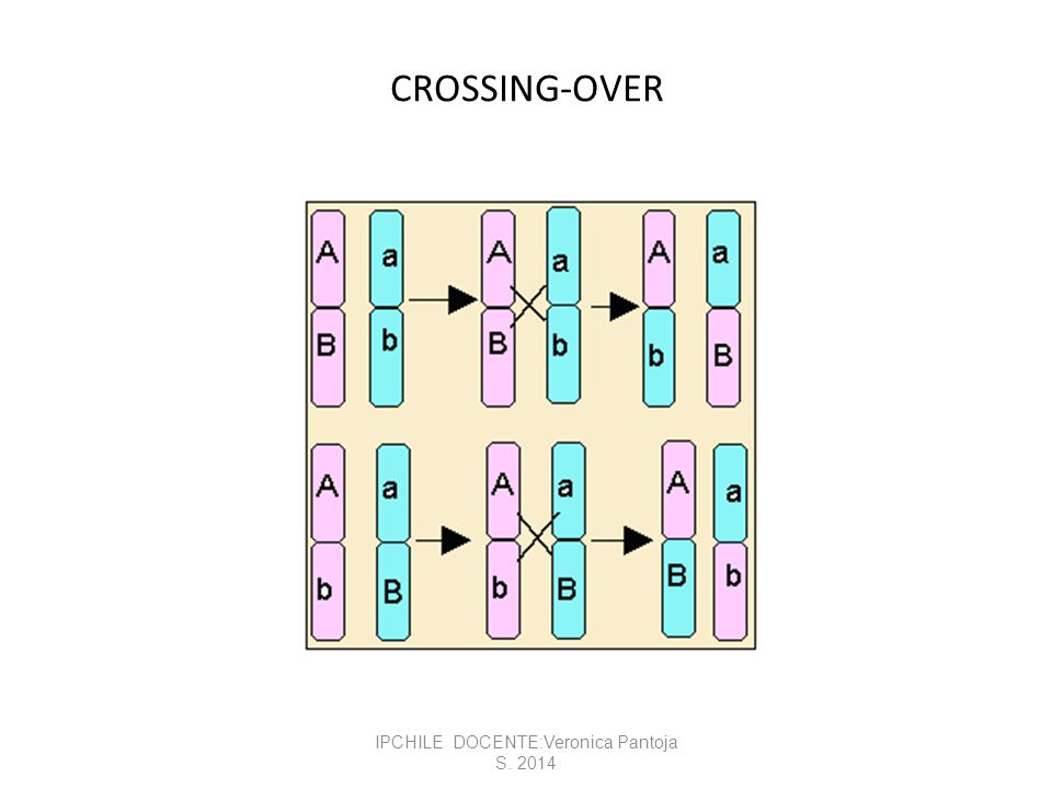 CROSSING-OVER IPCHILE DOCENTE:Veronica Pantoja S. 2014