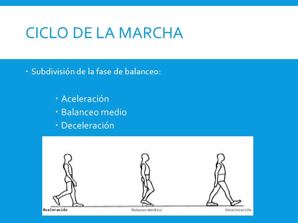 CICLO DE LA MARCHA  Subdivisión de la fase de balanceo:  Aceleración  Balanceo medio  Deceleración