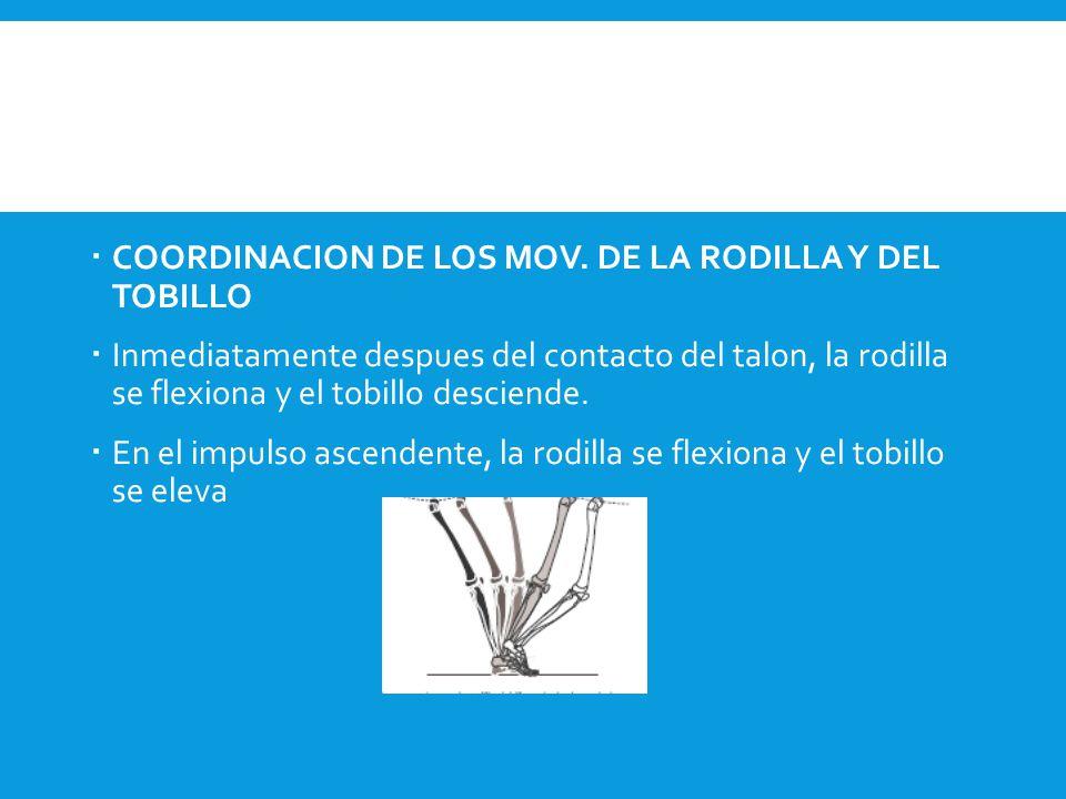  COORDINACION DE LOS MOV. DE LA RODILLA Y DEL TOBILLO  Inmediatamente despues del contacto del talon, la rodilla se flexiona y el tobillo desciende.