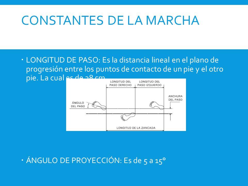 CONSTANTES DE LA MARCHA  LONGITUD DE PASO: Es la distancia lineal en el plano de progresión entre los puntos de contacto de un pie y el otro pie. La