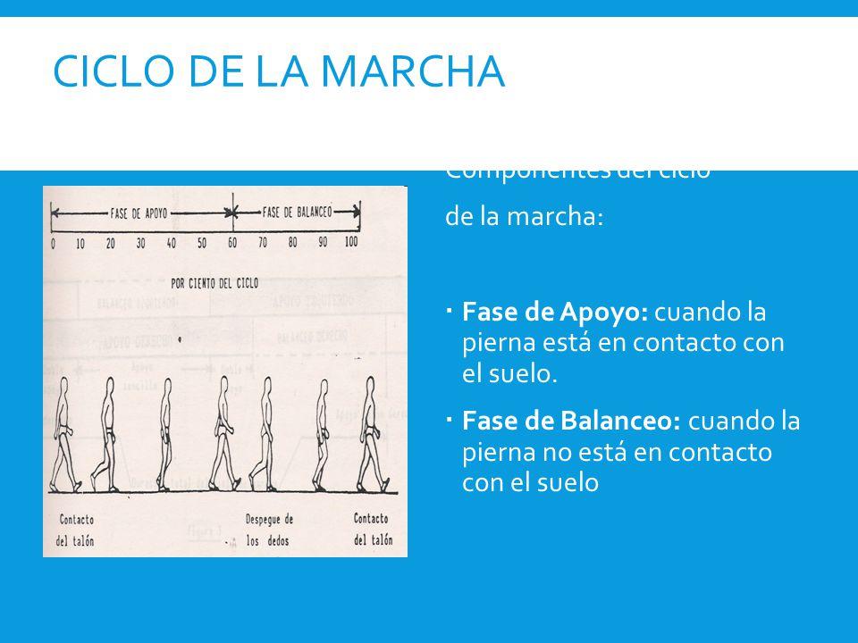 Componentes del ciclo de la marcha:  Fase de Apoyo: cuando la pierna está en contacto con el suelo.  Fase de Balanceo: cuando la pierna no está en c