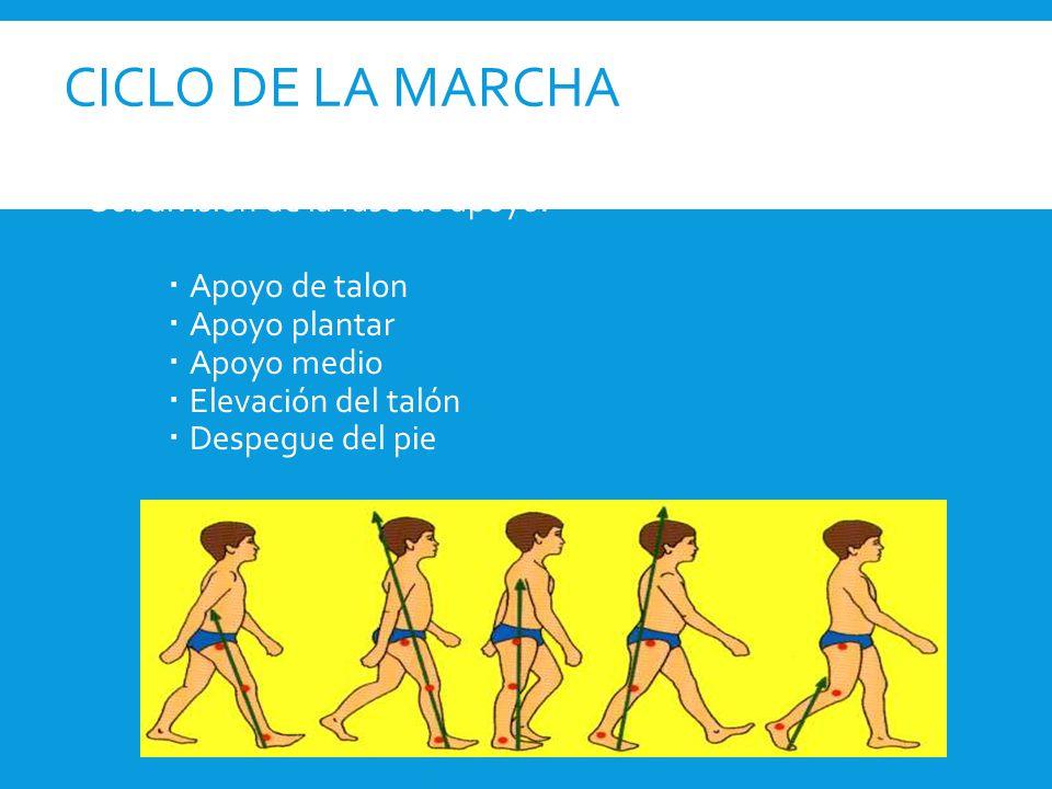 CICLO DE LA MARCHA  FASE DE APOYO 60%  1.-APOYO DEL TALÓN: Se refiere al instante en que el talón de la pierna de referencia toca el suelo.(15%)  2.-APOYO PLANTAR: Se refiere al contacto de la parte anterior del pie con el suelo.(15%)