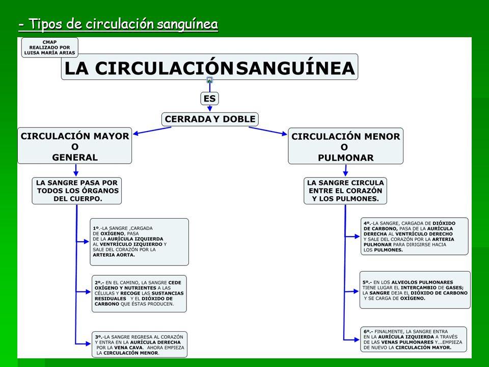- Tipos de circulación sanguínea