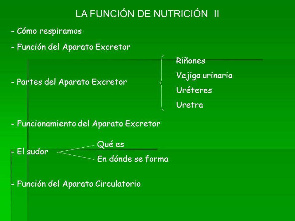 LA FUNCIÓN DE NUTRICIÓN II - Cómo respiramos - Función del Aparato Excretor Riñones Vejiga urinaria Uréteres Uretra - Partes del Aparato Excretor - Fu