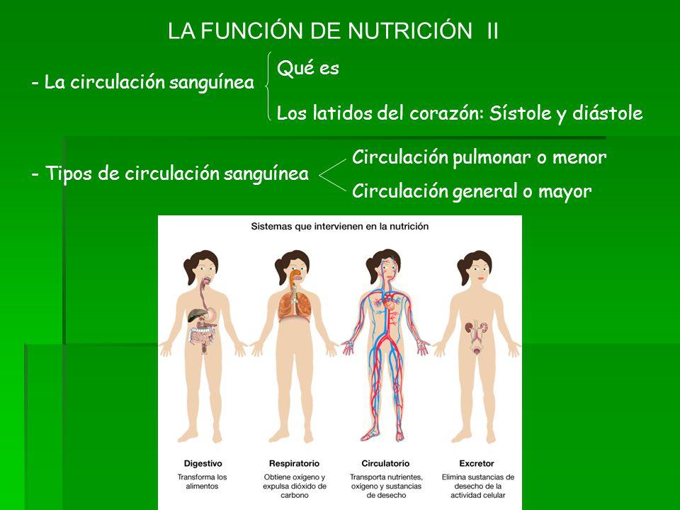 LA FUNCIÓN DE NUTRICIÓN II Qué es Los latidos del corazón: Sístole y diástole - La circulación sanguínea - Tipos de circulación sanguínea Circulación