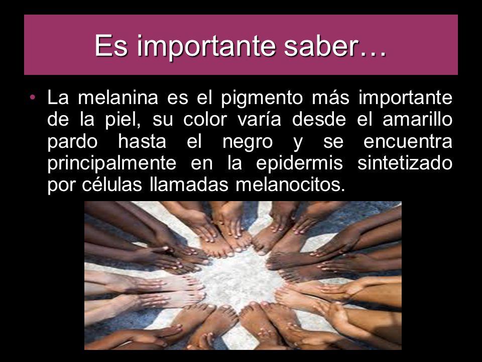 Es importante saber… La melanina es el pigmento más importante de la piel, su color varía desde el amarillo pardo hasta el negro y se encuentra principalmente en la epidermis sintetizado por células llamadas melanocitos.