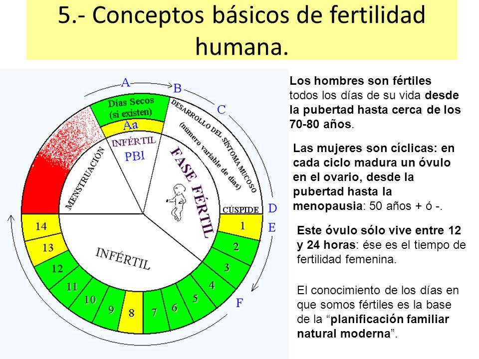 Resultado de imagen para calendario ovulacion para tener varon