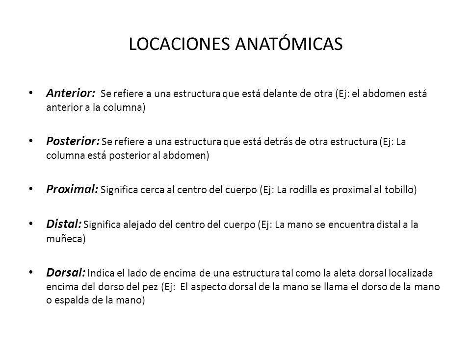 LOCACIONES ANATÓMICAS Anterior: Se refiere a una estructura que está delante de otra (Ej: el abdomen está anterior a la columna) Posterior: Se refiere