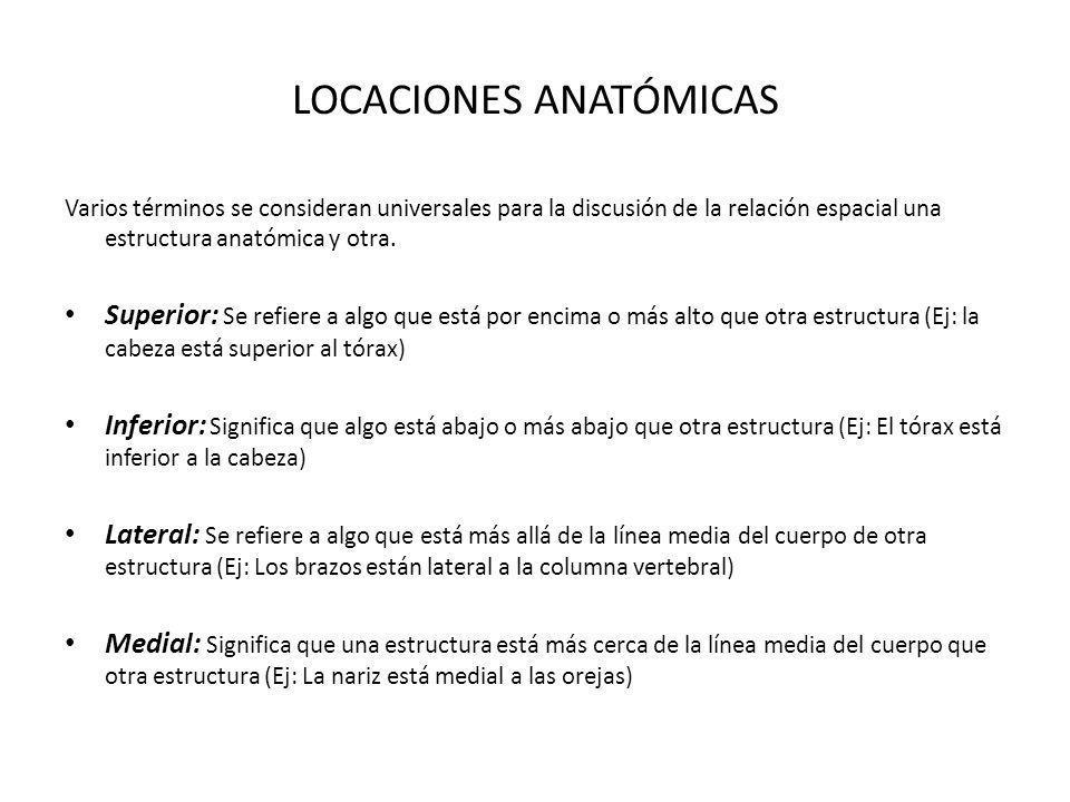 LOCACIONES ANATÓMICAS Varios términos se consideran universales para la discusión de la relación espacial una estructura anatómica y otra. Superior: S