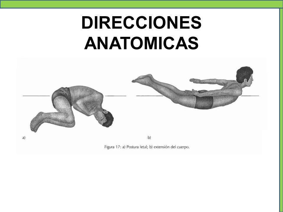 DIRECCIONES ANATOMICAS