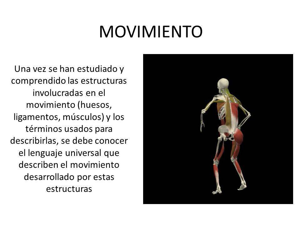MOVIMIENTO Una vez se han estudiado y comprendido las estructuras involucradas en el movimiento (huesos, ligamentos, músculos) y los términos usados p