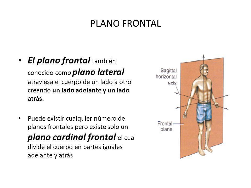 PLANO FRONTAL El plano frontal también conocido como plano lateral atraviesa el cuerpo de un lado a otro creando un lado adelante y un lado atrás. Pue