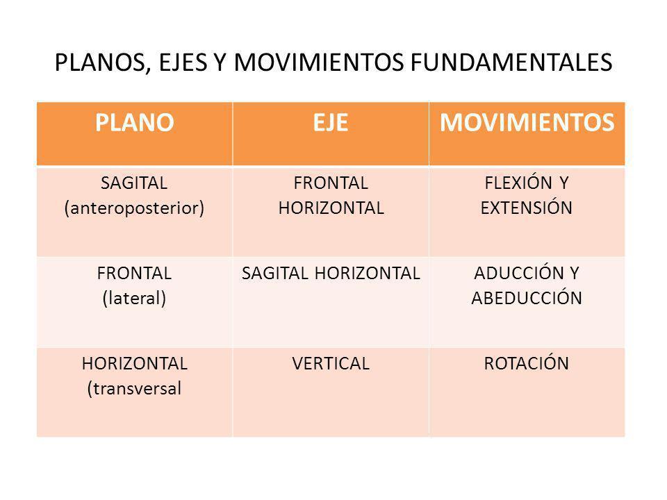 PLANOS, EJES Y MOVIMIENTOS FUNDAMENTALES PLANOEJEMOVIMIENTOS SAGITAL (anteroposterior) FRONTAL HORIZONTAL FLEXIÓN Y EXTENSIÓN FRONTAL (lateral) SAGITA