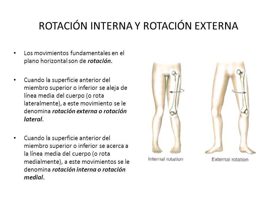 ROTACIÓN INTERNA Y ROTACIÓN EXTERNA Los movimientos fundamentales en el plano horizontal son de rotación. Cuando la superficie anterior del miembro su