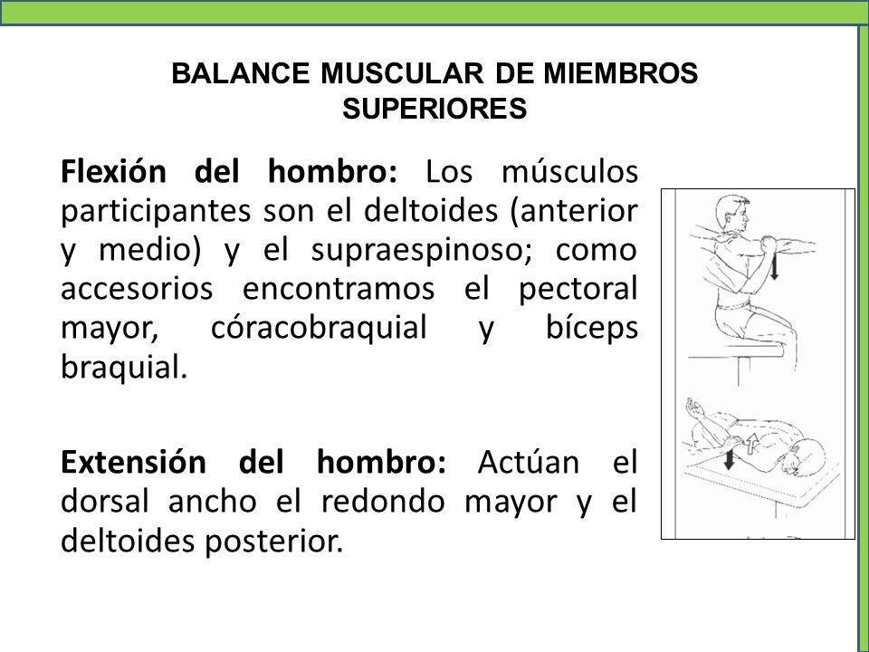 BALANCE MUSCULAR DE MIEMBROS SUPERIORES Flexión del hombro: Los músculos participantes son el deltoides (anterior y medio) y el supraespinoso; como ac