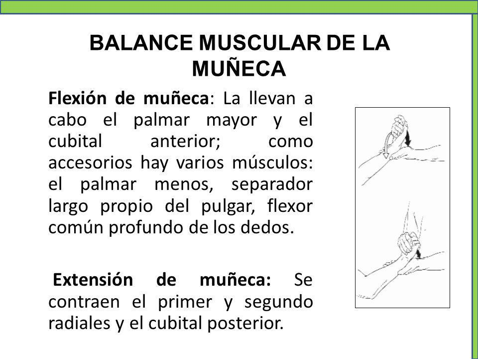 BALANCE MUSCULAR DE LA MUÑECA Flexión de muñeca: La llevan a cabo el palmar mayor y el cubital anterior; como accesorios hay varios músculos: el palma