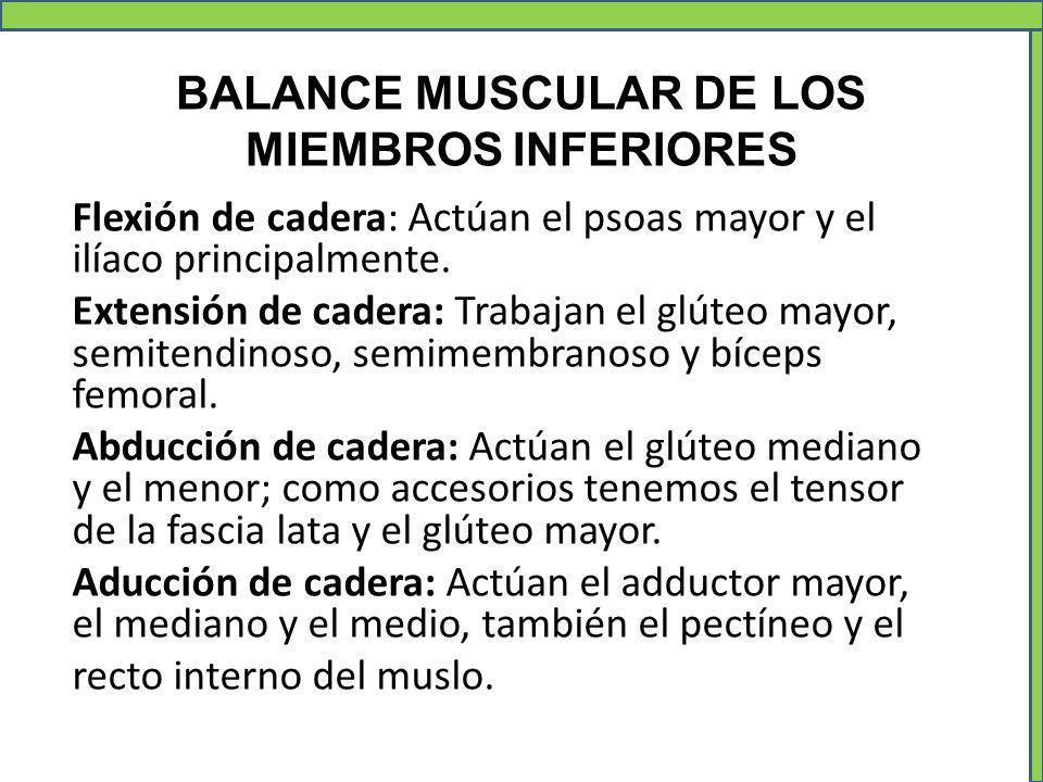 BALANCE MUSCULAR DE LOS MIEMBROS INFERIORES Flexión de cadera: Actúan el psoas mayor y el ilíaco principalmente. Extensión de cadera: Trabajan el glút