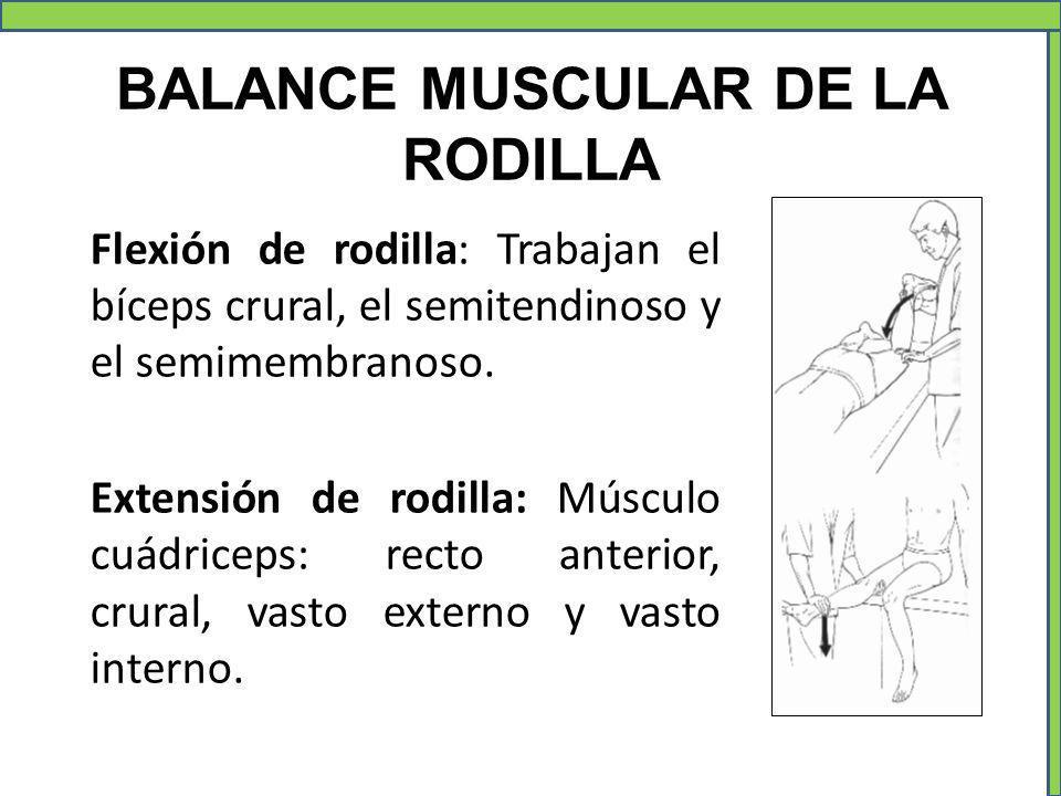 BALANCE MUSCULAR DE LA RODILLA Flexión de rodilla: Trabajan el bíceps crural, el semitendinoso y el semimembranoso. Extensión de rodilla: Músculo cuád