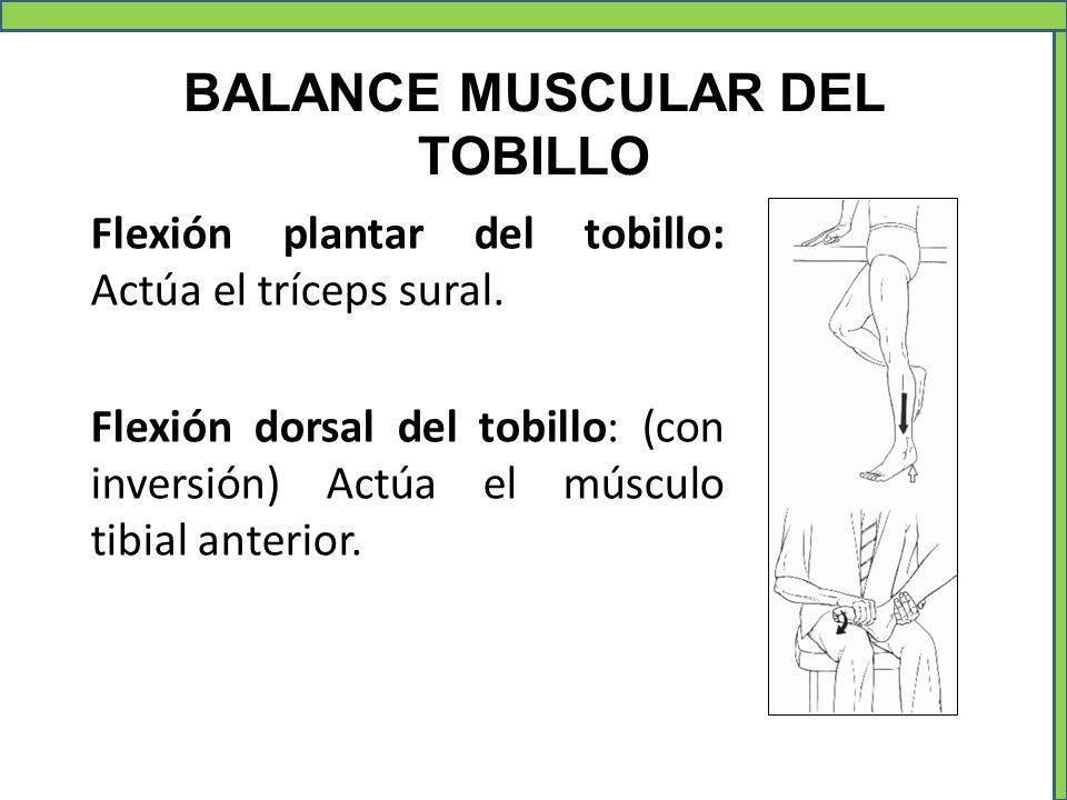 BALANCE MUSCULAR DEL TOBILLO Flexión plantar del tobillo: Actúa el tríceps sural. Flexión dorsal del tobillo: (con inversión) Actúa el músculo tibial