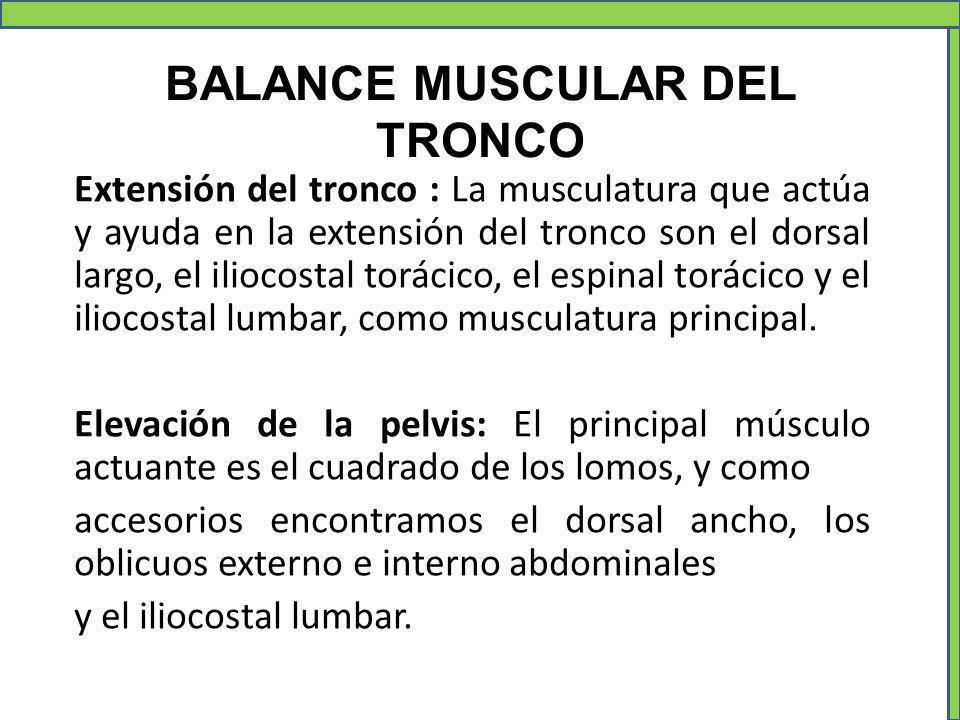 BALANCE MUSCULAR DEL TRONCO Extensión del tronco : La musculatura que actúa y ayuda en la extensión del tronco son el dorsal largo, el iliocostal torá