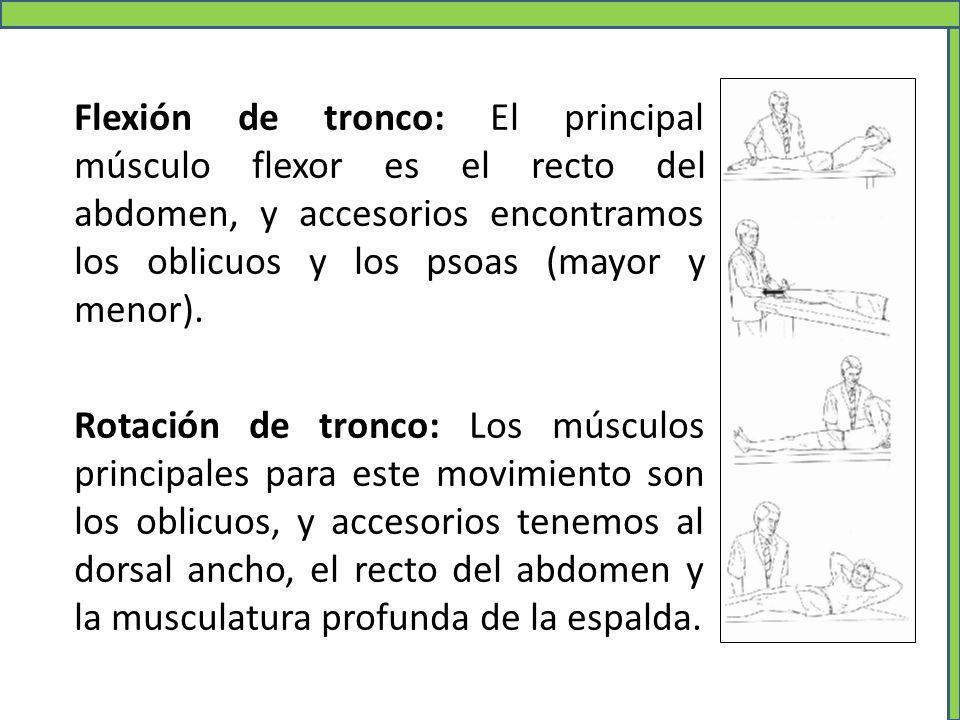 Flexión de tronco: El principal músculo flexor es el recto del abdomen, y accesorios encontramos los oblicuos y los psoas (mayor y menor). Rotación de