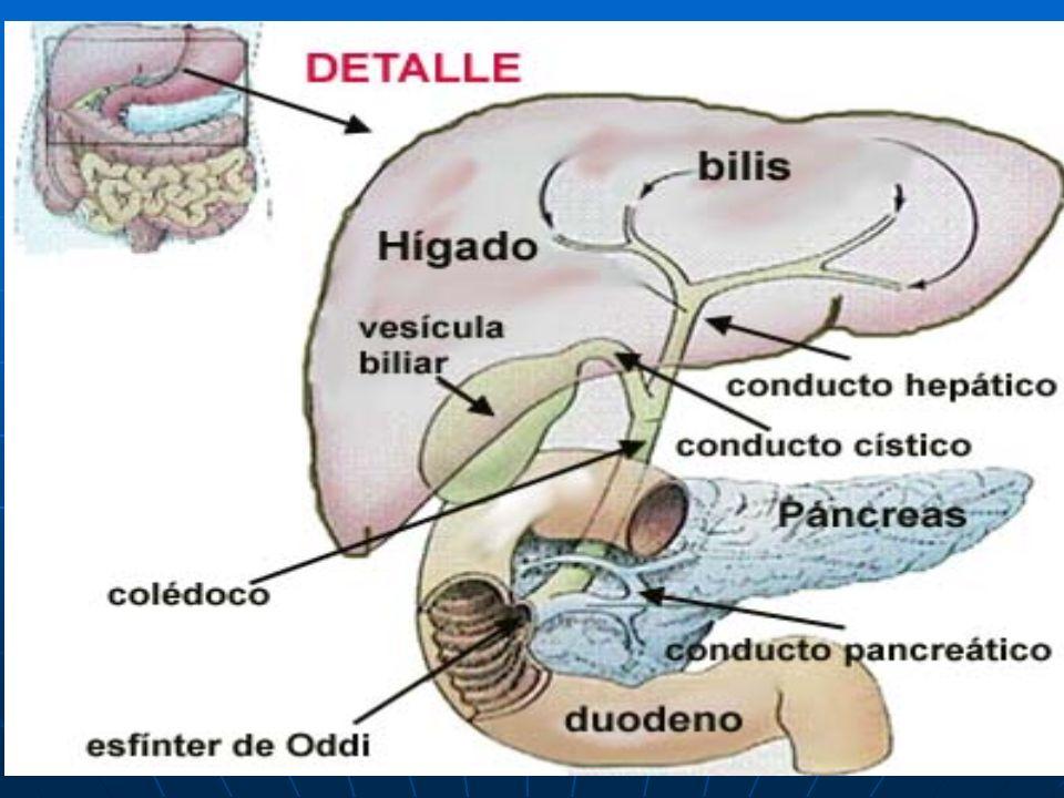 Bioquímica de la Digestión Monogástricos y Aves - ppt video online ...