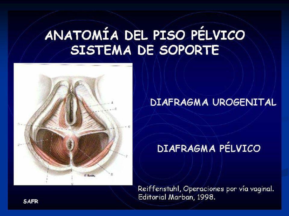 Anatomía Funcional del Piso Pélvico - ppt video online descargar