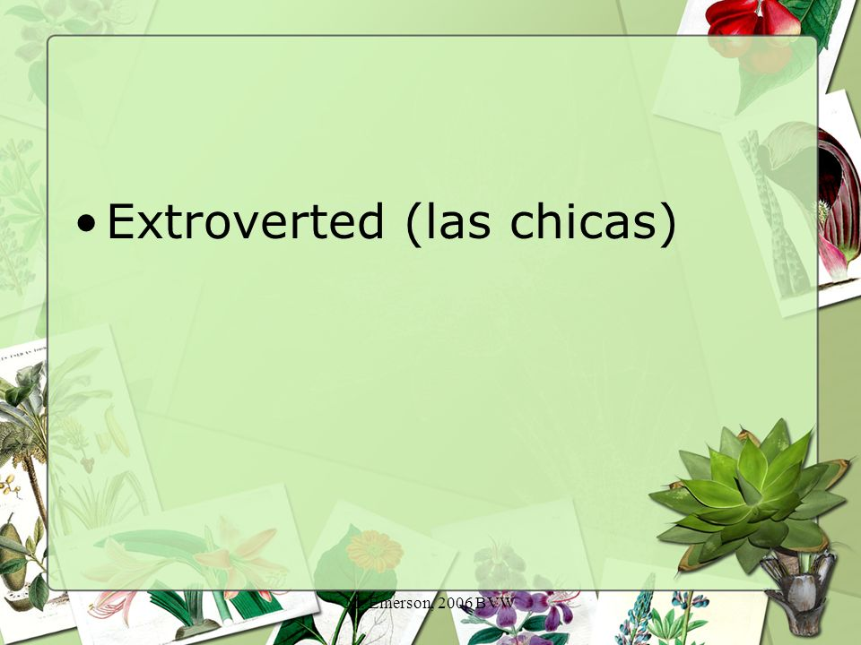M. Emerson, 2006 BVW Extroverted (las chicas)