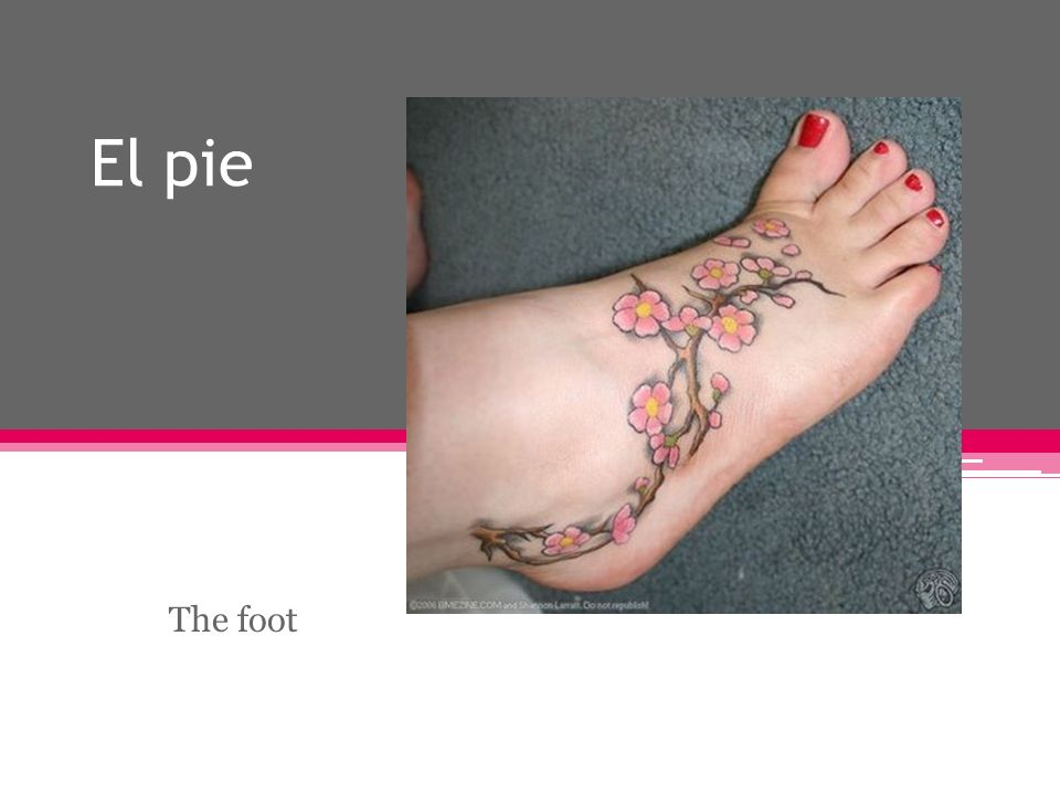 El pie The foot