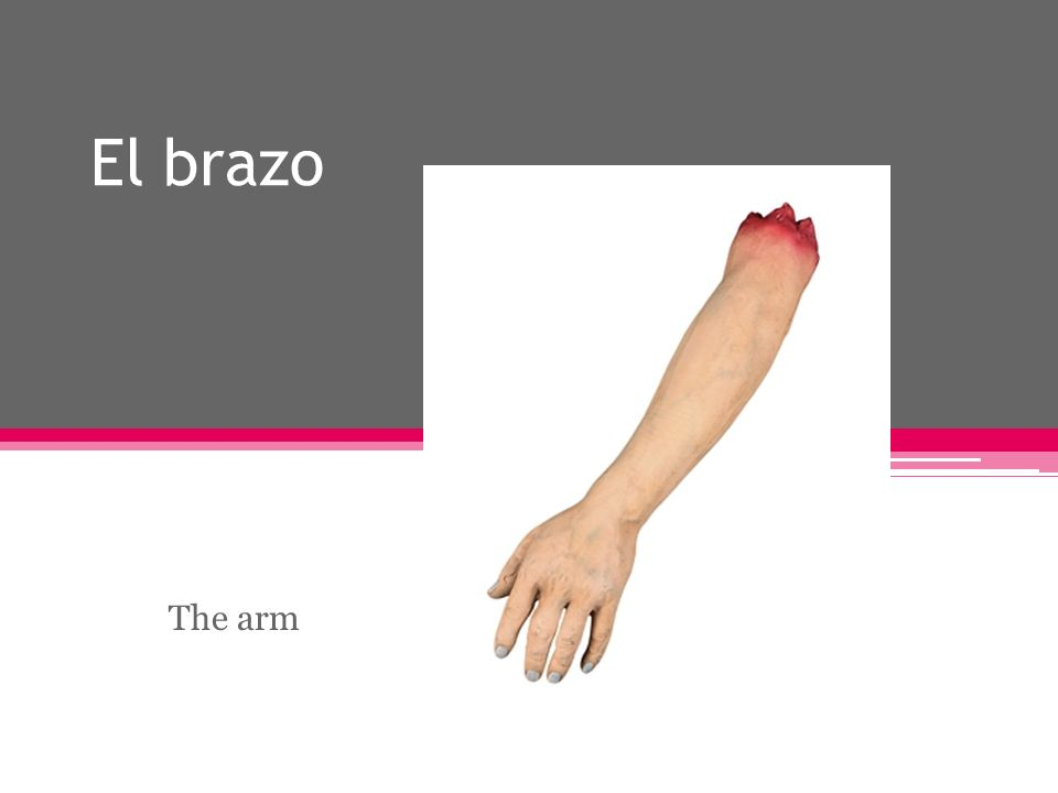 El brazo The arm
