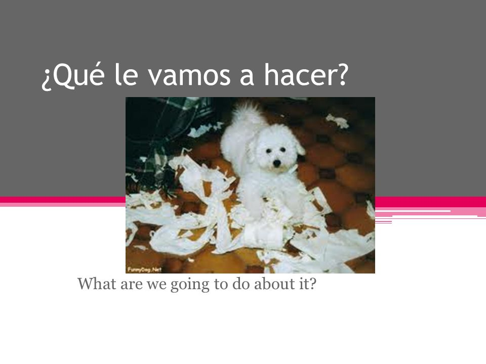 ¿Qué le vamos a hacer What are we going to do about it