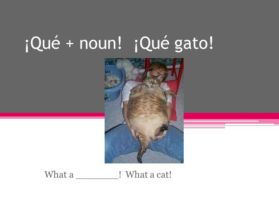 ¡Qué + noun! ¡Qué gato! What a _______! What a cat!