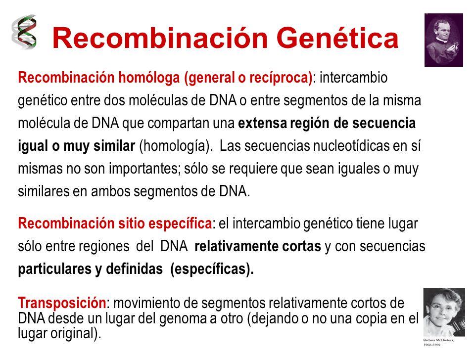 Recombinación genética recombinación homóloga (general o recíproca.