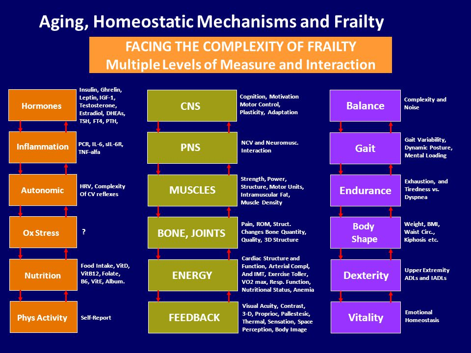 Aging, Homeostatic Mechanisms and Frailty FACING THE COMPLEXITY OF FRAILTY Multiple Levels of Measure and Interaction CNS PNS MUSCLES BONE, JOINTS ENERGY FEEDBACK Cognition, Motivation Motor Control, Plasticity, Adaptation NCV and Neuromusc.