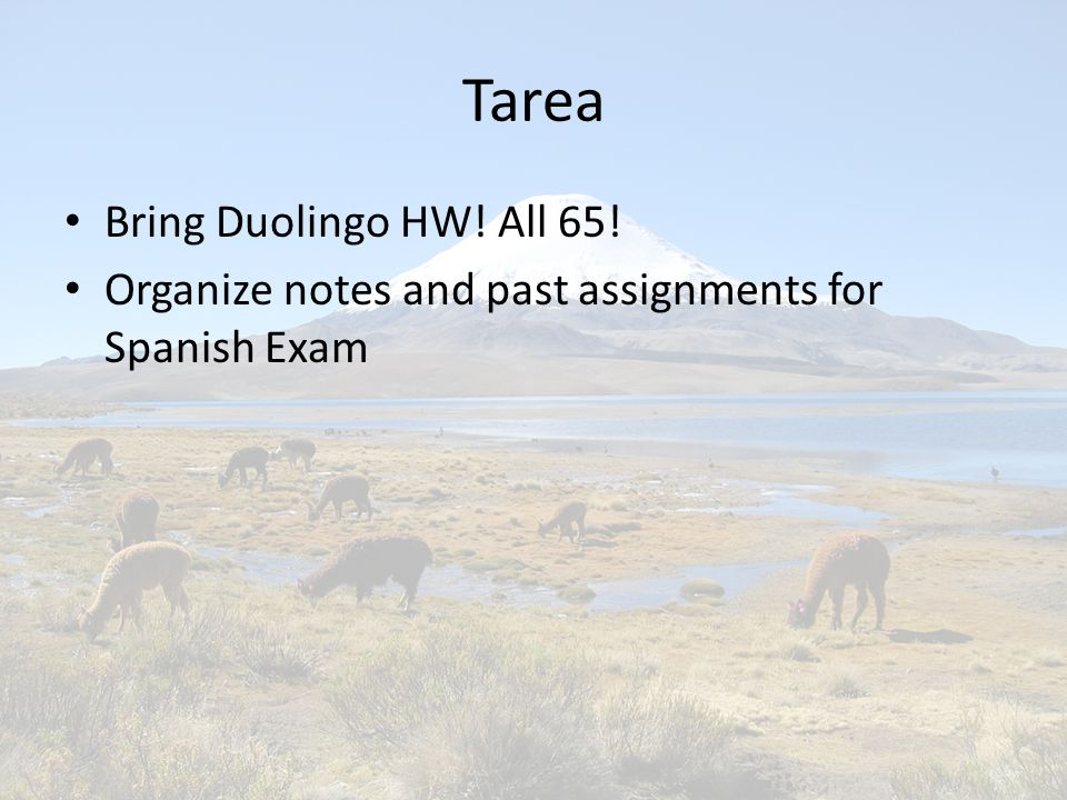 Tarea Bring Duolingo HW! All 65! Organize notes and past assignments for Spanish Exam