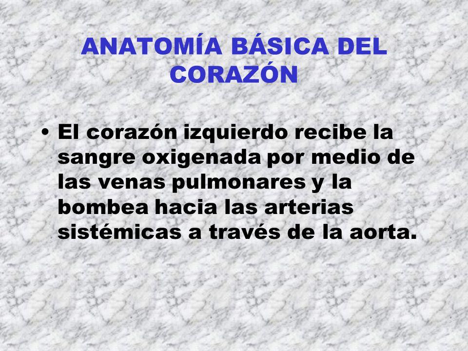 TOXICOLOGÍA DEL SISTEMA CARDIOVASCULAR Guzmán, Saúl. - ppt descargar